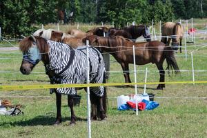 Hästarna fick vila sig.