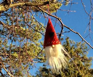 En del tomtar hänger i träden. Foto: Birgitta Söderström