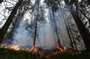 Från branden i Norrmossaflon, sollefteå som fortfarande pågår.