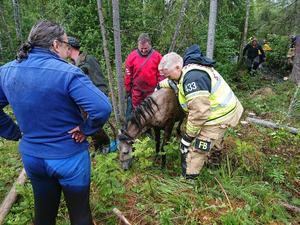 Brandkåren i Leksand ryckte på onsdagseftermiddagen ut till Bodaån i Leksands kommun där en unghäst hade gått ner sig i en å. Brandkåren lyckades få upp hästen som lokaliserades med en drönare. Foto: Brandkåren i Leksand