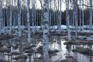 Hedersomnämnande. Den tidiga våren, när isen släpper tag om den frusna marken och man anar vad som komma skall. Den här bilden har fångat vinterns sista suck. Foto: Ola Pettersson