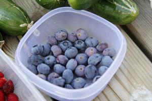 Amerikanska blåbär är stora och söta.