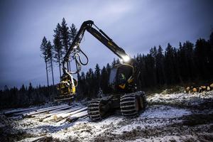 Pierre Ragnarsson fotar gärna vardagen i skogen. När han tidigare körde Komatsus maskiner vann han företagets fototävling fyra år i rad.