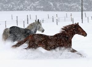 Foto:  Uwe Lein AP Photo/ SCANPIXI Stockholms län har fall av abortviruset EHV-1 på häst konstaterats. I Gävleborg har inga fall konstaterats.