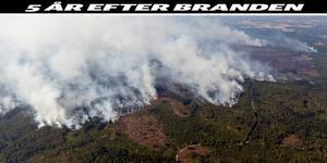 Foto från ovan på den stora skogsbranden i Västmanland 2014. Foto: Jocke Berglund/TT