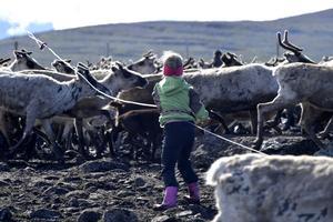 Att kasta lasso är traditionen som Idre nya sameby håller fast vid och som Eijra lärt sig.