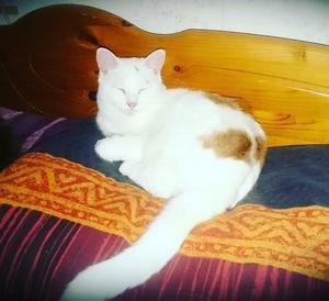 493) DOGGE är 2år och gillar att sova på familjens akvarium. Han älskar att sova kungligt, varmt o mjukt som bilden också avslöjar. En myskisse. Foto: Peter Samuelsson