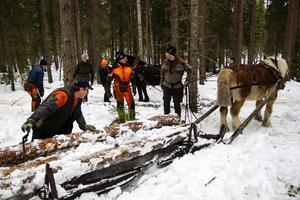 Ute i skogen lastar Lars Danhard timmer på släden.