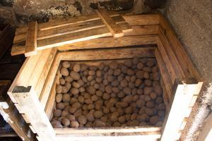 varje år köper Olle och Åsa 150 kilo potatis som de förvarar i jordkällaren. De äter potatis nästan varje dag.