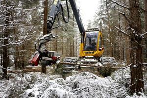 Bilden är tagen vid en skogsavverkning mellan Vretstorp och Laxå i december. Arkivbild.
