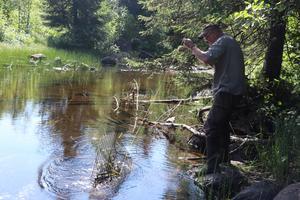 Projektledare Håkan Möller tar upp en av de många sumparna under dagens arbete i Ånges alla vattendrag. I denna bur levde alla kräftor som tur var.