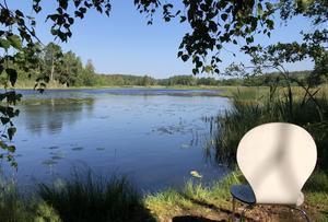 På skogskyrkogården på Lillön har naturen tagit över med buskar, blåbärsris och träd. Men det går bra att sitta ned för en stunds eftertanke och ro intill platsen vid Borsåns västra flöde. Bild: Sten B Norén.