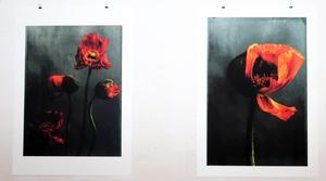 Ewa- Marie Rundquists foton ur utställningen