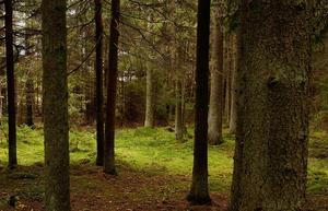 Skogen, som förnybar resurs, måste nyttjas klimatsmart.