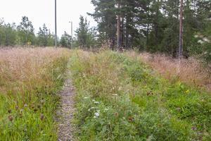 Ali Nefzi hoppas att folk har överseende med växtlighet i spåret i väntan på en långsiktig lösning.