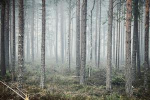 Är idiotin som härjar kring bränderna i Sverige ett av många tecken på att vi människor blivit dumma i huvudet? Björn Brånfelt har sin analys klar. Foto: Erik Simander / TT.