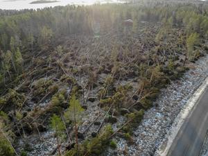 I Norrtälje har många träd fallit på grund av stormens framfart. Foto: Henrik Ismarker/Spillersboda flygfoto