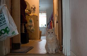 Ulla Jäderström har två katter och en hund som hon lever med.