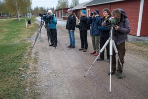 Deltagarna i fågelutflykten spanar här på bland annat svarthakedopping, grönbenor och viggar. Fotograf: Lars Hägglund