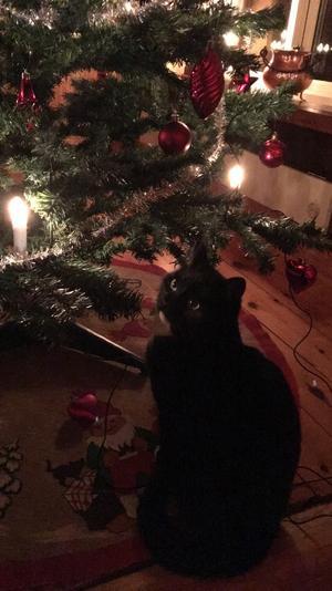 397) Astrid väntar på sin chans att ta ner en av alla roliga julkulor i granen! Foto: Åsa Hall Larsson
