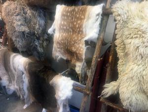 Skinn från många olika sorters djur garvas i Bruksvallarna