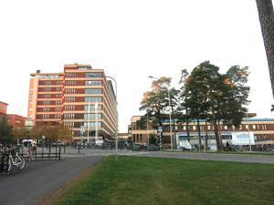 Ett rum på psykiatriska avdelningen på Gävle sjukhus ska saneras efter att två vägglöss-hundar markerat mot en madrass. Arkivbild.