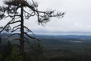 En vidunderlig utsikt från Hemberget över de blånande bergen.