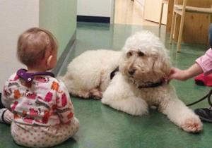 Vårdhunden Livia gör att barnen blir gladare och vill vara på sjukhuset.