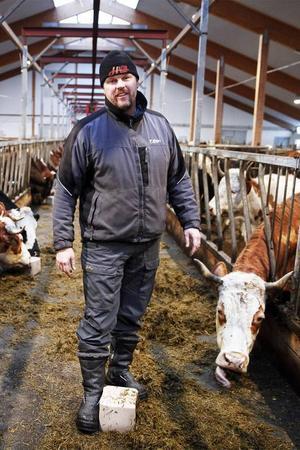 Mikael Eriksson flyttar saltsten närmare korna