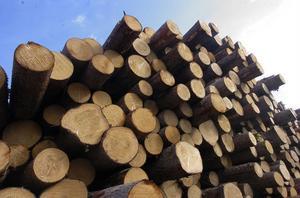 Prisbilden för timmer och massaved är fortfarande relativt hög trots den nedgång som varit inom skogsnäringen.