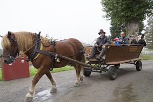 Åka häst och vagn var något besökarna kunde åtnjuta den lördagsförmiddag.