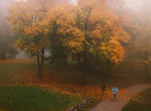En blåklädd cyklist piffade upp färgerna i slottsparken för några sekunder iaf innan allt blev enbart  gult igen.