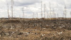 Skogen efter branden år 2014.