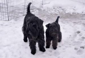 Juni är färdigutbildad terapihund och Trolla har påbörjat sin utbildning. Båda är två mycket sociala hundar.