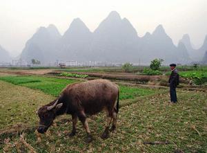 Den kinesiske bondens miljö är hemtam för Mo Yan.