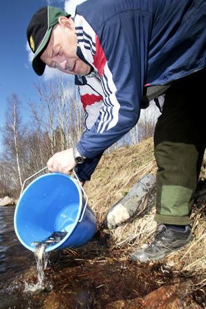 Göran Dahlberg fyller på fiskebeståndet i Kyrkströmmen.