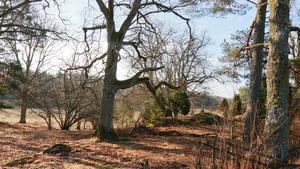 Käringboda har en säregen förmåga att byta skepnad mellan årstiderna, skriver Lennart.