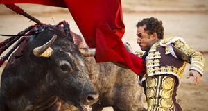 Spanska matadoren Rafaelillo mäter sina krafter i manegen. Vissa anser det vara kultur andra menar att tjurfäktningarna bara är rent djurplågeri.
