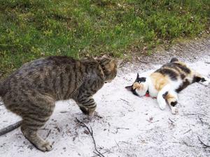 Kattbus på fjälltur.