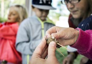 Olivia Berntsson gjorde ett fantasifullt djur av en kotte i Gällö skogs monter.
