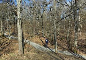 De grusade gångarna är sammanlagt 1,5 kilometer långa. Den asfalterade och belysta gång- och cykelvägen är 600 meter.