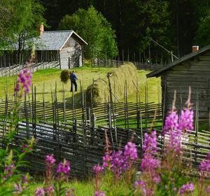 VinnarbildenSommaridyll vid Våsbo fäbodar norr om Edsbyn. Yngve Jonsson hässjar hö i kvällssolen på Skomakarvallen.Foto: Seth Nilsson, HudiksvallJuryns omdöme: Man får en känsla av att man smygtittar in på fäbodvallen. Man känner doften av nyslaget hö och värmen från marken. Det är ett vackert ljus i bilden. Det här är sinnebilden av det Hälsingland som både turister och hälsingar längtar till.