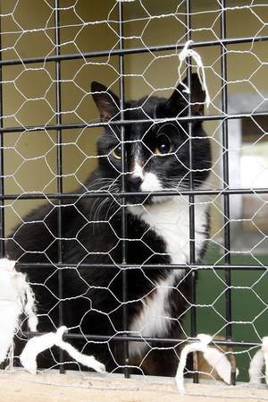 Hankatten som dumpades tillsammans med en katthona är id-märkt och kastrerad. Nu vill Bill och Bull få hjälp att hitta kattens ägare.
