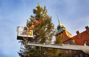 Pyntningen av granen utanför Rådhuset är i full gång och på söndag, första advent, avslöjas färgskenet på julgransljusen.  Foto: Mattias Moberg