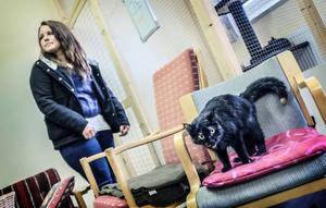 Ann-Marie Esbjörnsson funderar på att köpa en katt från katthemmet.