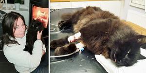 Marie Nymark bor i ett område med många sommarstugor. Hon misstänker att många lägger ut gift när de lämnar stugorna för vintern. Hon höll på att förlora båda sina katter på grund av att de fått i sig gift.