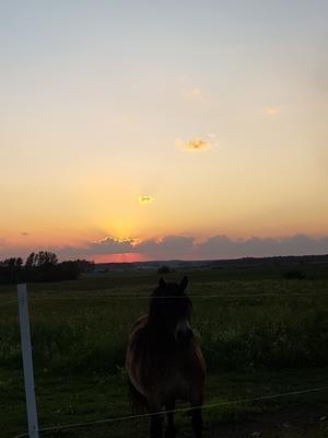 Vi var ute en kväll och spanade efter älgar med våran snart 3 åriga såg när jag fick syn på den fina himlen som bakgrund till den stora fina hästen. Foto: Emma Andersson