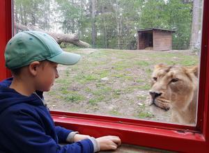Möte mellan människa och djur. Öga mot öga.