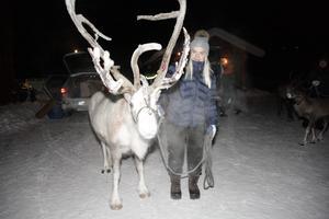 Sunna Rensberg från Sörvattnet visade upp renen Gasta (Gustav på sydsamiska) för besökarna.