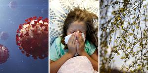 Pollen eller covid? Så vet du om dina symptom är farliga.